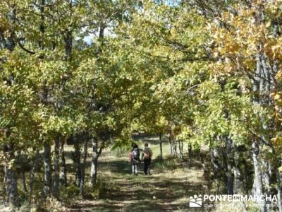senderismo organizado, Parque Natural del Hayedo de Tejera Negra; recorridos por madrid